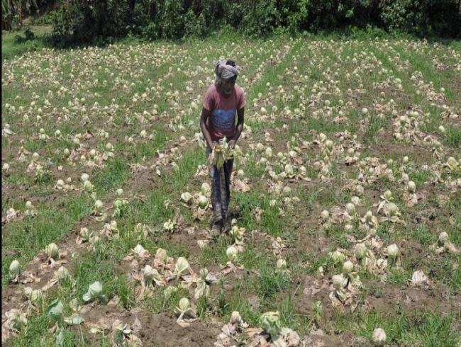 Farmer's death becomes political football in Telangana