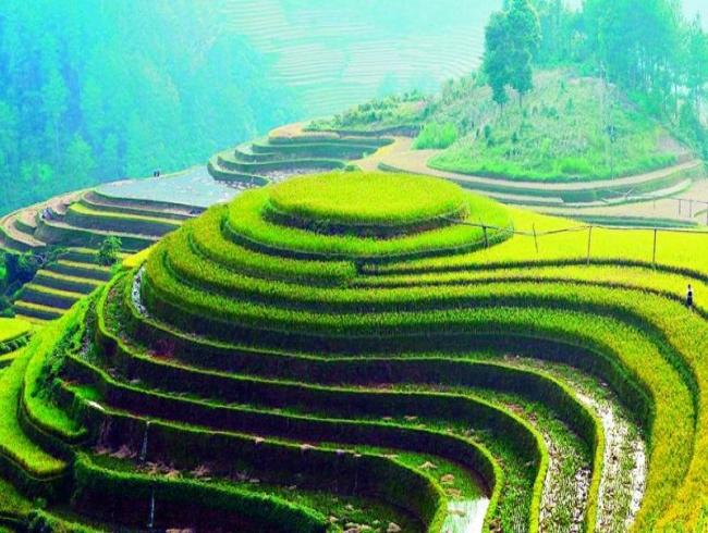 Glocally speaking: Vietnam views