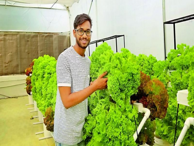 Hyderabad's very own Hydroponic farmers