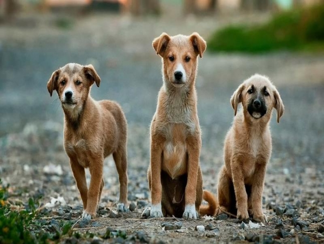 Bengaluru: Dog lovers smiling! Controversial law withdrawn
