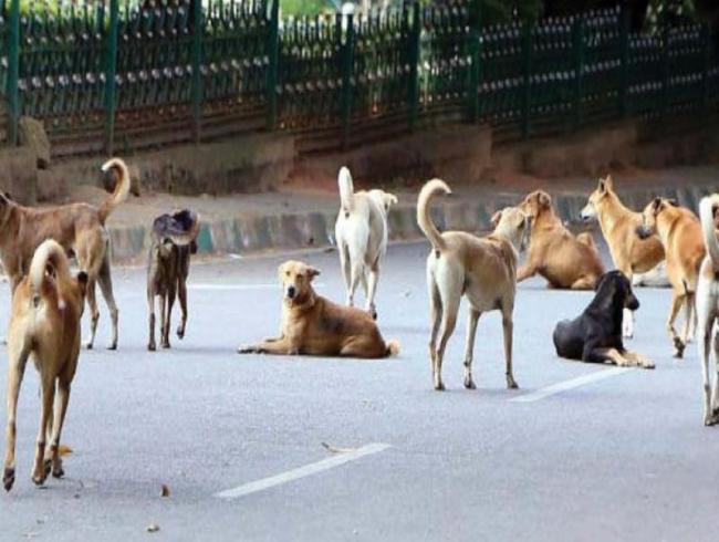 Bengaluru's Strays: Unloved, Beaten, Killed