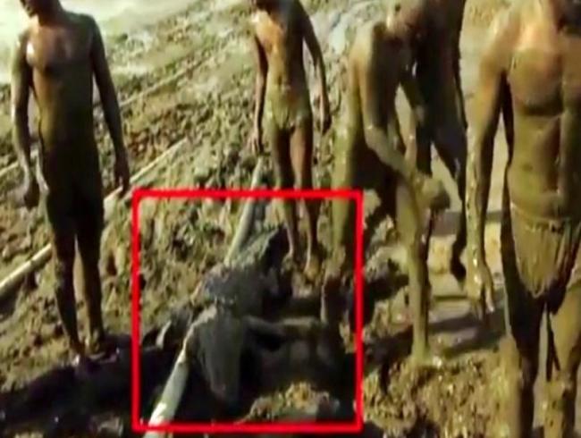 Video: Brave Karnataka farmers drag crocodile stranded in mud to safety