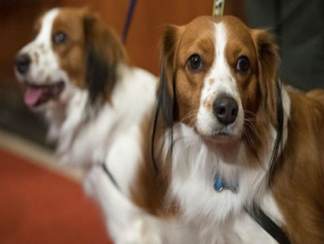 Two new dogs added to American Kennel Club