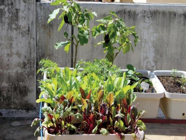 Dil garden, garden!