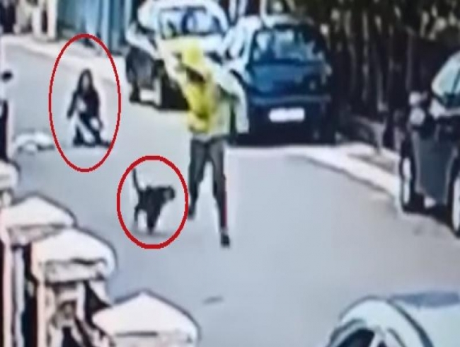 Video: Viral footage shows courageous dog saving woman from being robbed