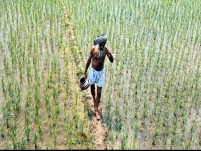 Centre's new agriculture laws haven't impacted AP farming